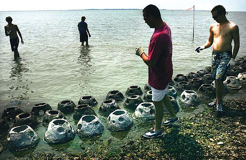 Jake Taylor, in the red shirt, of the Virginia Marine Resource  Commission and volunteer Carter Hanson  count the concrete balls that were placed in shallow water off the Eastern Shore on Wednesday.